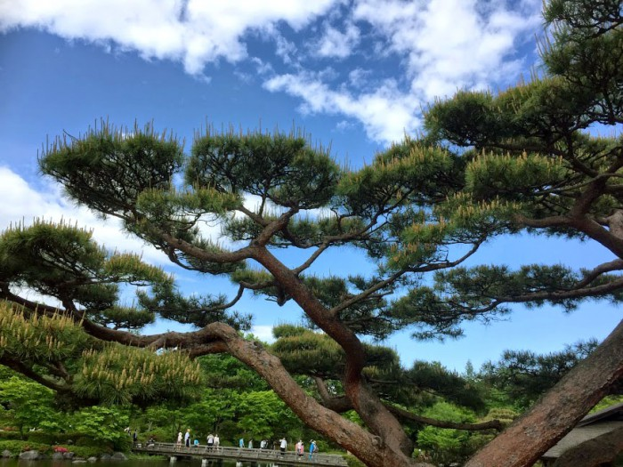 松_昭和記念公園